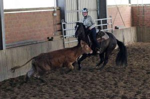 Ranch Cutting: Clara Breuer und Kings Little Bueno